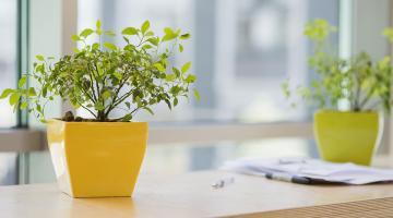 Quelles plantes pour mon appartement neuf ?